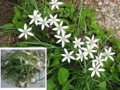 FATSA YUKARITEPE KÖYÜ - Yöremizin Bitki Örtüleri