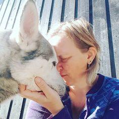 Hachiko 💖  #siberianhuskies #siberianhuskiesofinsta #siberianhusky #siberianhusky_feature #siberianhuskyofnorway #siberianhuskyoftheday… Hachiko, Husky, Dogs, Animals, Animales, Animaux, Doggies, Animal, Animais
