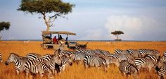 Best of African Safari to Kenya and Tanzania tourist attractions. Book now to enjoy wildlife adventure tours, beach and safari holidays, excursions. Kenya Travel, Africa Travel, Wild Life, Countries To Visit, Places To Visit, Safari Holidays, Tanzania Safari, Wildlife Safari, Adventure Holiday