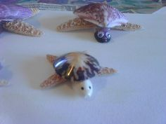Small Seashell Turtle