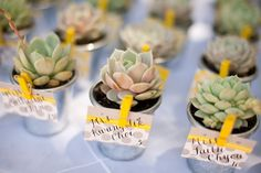 don't like the yellow clips but love the idea of succulent Favors!