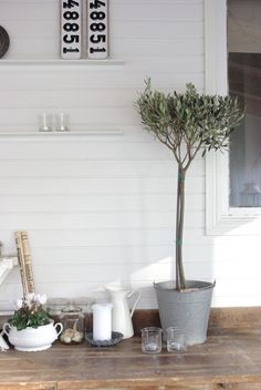 love the olive tree and tin bucket combo!