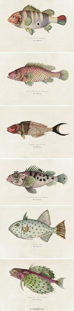 antique illustration fish