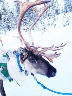 Lapland, Finland.  Cabins and Activities in Saariselkä http://www.saariselka.com