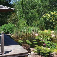 DIY Natural Backyard Pond Learn how to build a natural backyard pond that stays clean and algae-free without the use of pumps, filters or chemicals. Backyard Water Feature, Ponds Backyard, Garden Ponds, Backyard Waterfalls, Koi Ponds, Natural Pond, Natural Garden, Water Garden Plants, Pond Plants