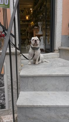 A dog taking care the shop in Colonnata.  #ohmyguide #travel #liguria #italy #colonnata #walkingtour #tourism #tourist
