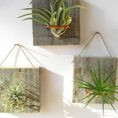 Set of Three SMALL FORM Air Plant and Barn Wood Grab door NiaCraft, $28.50