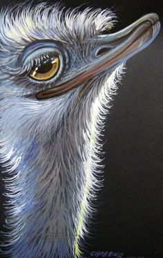 Ostrich Flirt 2012 by HouseofChabrier Bird Painting Acrylic, Flamingo Painting, Art Deco Paintings, Animal Paintings, Butterfly Sketch, Chicken Pictures, Pole Art, Funny Birds, Happy Animals