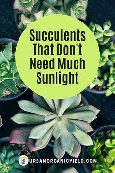Succulent Planter Diy, Succulent Gardening, Planting Succulents, Planting Flowers, Gardening Tips, Succulent Outdoor, Indoor Succulents, Flowering Succulents, Propagating Succulents