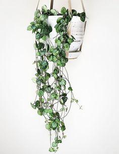 Easy Houseplants For Indoor Plants - decoratoo Vertical Garden Design, Vertical Gardens, Hanging Plants, Indoor Plants, Hanging Gardens, Hanging Baskets, Plant Decor, Garden Planning, Houseplants