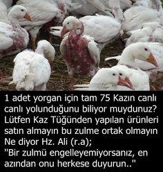 Ahmet krtl Muslim Pray, Save Nature, Good Sentences, Interesting Information, Interesting Facts, Allah Islam, Mans World, Best Wordpress Themes, Meaningful Quotes
