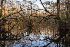 Swamp Walk – Sweetwater Strand, Loop Road, Everglades, FL | Nick Botner Photography