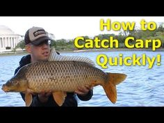 How to catch carp in a hurry. Fishing for carp with pack bait is a great way to catch carp when you only have a little time to fish. This is how I catch carp. Carp Fishing Videos, Crappie Fishing Tips, Carp Fishing Bait, Fishing Rigs, Fishing Guide, Fishing Lures, Fishing Stuff, Fishing Knots, Saltwater Fishing
