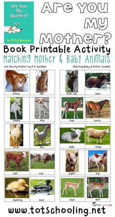 Free Mother & Baby Animals Matching Activity Free printable book activity for toddlers and preschoolers based on the book Are You My Mother? where the child matches 10 different baby & mother animal pairs. Great activity for Mother's Day! Preschool Science, Preschool Classroom, Toddler Preschool, In Kindergarten, Toddler Activities, Preschool Farm, Preschool Books, Preschool Learning, Preschool Family Theme