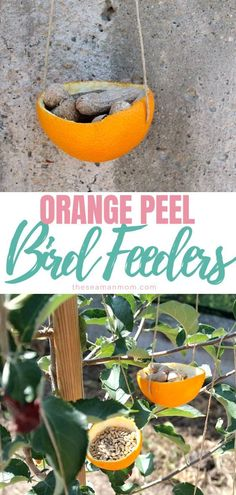 Need ideas for cheap bird feeders? Why go out and buy an expensive bird feeder when you can make one yourself? This easy orange bird feeder craft will teach you how, using just a couple of supplies you probably have on hand! #easypeasycreativeideas #orange #orangepeel #recycle #recycledcrafts #birds #birdfeeders #garden #gardenideas #gardening