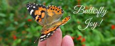 Butterfly Puddling | Butterfly Lady