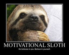 Sloth Mom Haircut Swag Sloth With Haircut Meme Generator Imgflip, Funny Memes When You Let Your Mom Cut Your Hair Funniest, Why We Dont See A Lot Of Sloth Selfies Imgflip, Pictures Of Sloths, Cute Sloth Pictures, Animal Pictures, Talking Animals, Funny Animals, Cute Animals, Wild Animals, Cute Baby Sloths, Funny Talking