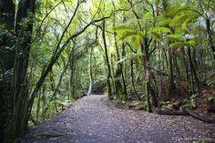 McLaren Falls Park    © Elyse Childs Photography