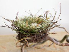 Vogelnest, Osternest, Nest