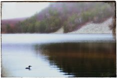 Morning with the loon - Devil's Lake State Park