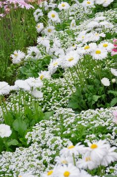 Beautiful Gardens, Beautiful Flowers, Garden Pictures, White Gardens, Blooming Flowers, Outdoor Plants, Front Yard Landscaping, Shade Garden, Flower Beds