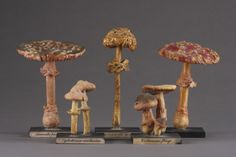 Finch & Co - Set of Twenty-Five Apothecary's Naturalistically Painted Plaster Display Models of Fungi