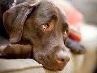 Tips Mengatasi Kegelisahan Anjing Saat Ditinggalkan Sendirian di Rumah