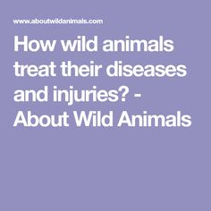 How wild animals treat their diseases and injuries? - About Wild Animals