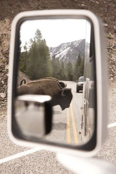 rear view mirror, reflection, adventure, USA, bison, road, driving, nature, herd animals, West, hindsight, travel, serendipity, outdoors, journey