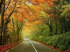 Karl Woodhouse's late autumn image captured on the road from Kinsale to Inishannon in Cork.