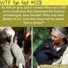 African Grey parrot that knows more than 900 words - WTF fun facts