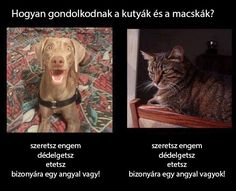 Kutya-macska | Socialhealth