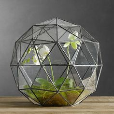 Orchid terrarium idea using a geodesic leaded glass container from Restoration Hardware, and phalenopsis and lady slipper plants. The environment is easier to control for some orchids when they are enclosed in glass.