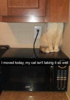 33 Funniest Cats On Snapchat