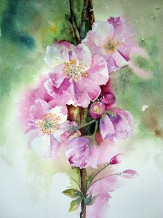 'Cherry Blossom'                                     Watercolour on Fabriano Artistico Extra White Rough - instructions on Watercolour Florals: March 2013