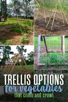 "I just love growing vegetables ""up,"" and each year I'm still looking for new trellis options. Not only does it make room for more crops (which is a huge plus if you have a small garden space or just a couple of raised beds), but they are just so pretty, too! I love these trellis options! #trellis #vegetables #garden #beginner"