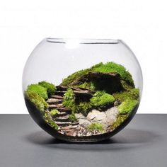 Over 40 suggestions on how to make a terrarium yourself b - Miniature Garden Ideas Decor Terrarium, Build A Terrarium, Moss Terrarium, Terrarium Plants, Terrarium Wedding, Aquarium Design, Ideas Florero, Amazing Gardens, Beautiful Gardens