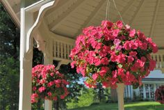 hanging flower baskets for shade - Google Search