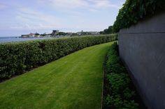 Hydrangea paniculata 'Unique', Olearia hedge, Hedera helix, Agata Byrne, award winning garden designer, landscape architect, coastal residential garden, Sandycove, Ireland, May 2014