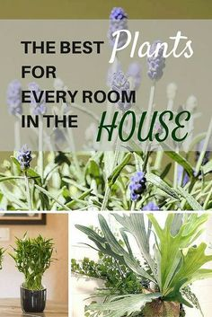 Believe it or not, some house plants are better suited to certain parts of the home, due to their ability to filter toxins or depending on their light and humidity preferences.