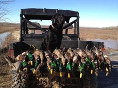 Oklahoma waterfowl hunting.