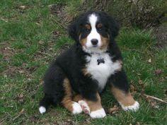 Mabel at 9 weeks.