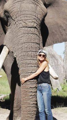 Фильм Прекрасные Создания, Слоны, Царство Животных, Африканский Слон, Собаки, Искусство