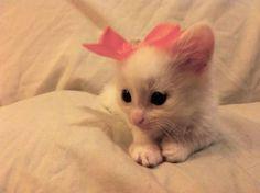 cute little pink nose.
