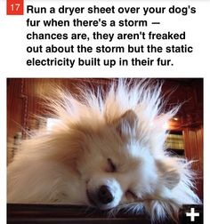 Run a dryer sheet over your dog& fur when there& a storm — chances are, they aren& freaked out about the storm but the static electricity built up in their fur. Animals And Pets, Cute Animals, Dog Hacks, Dog Care, Mans Best Friend, Dog Owners, Dogs And Puppies, Doggies, Baby Dogs