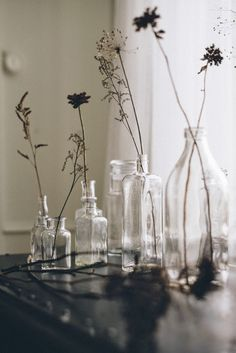 Botanical stems in old milk / ointment & apothecary bottles.