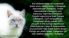 Tytuł Supreme Champion