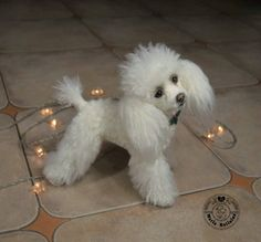 Your place to buy and sell all things handmade Poodle Cuts, Poodle Mix, Equine Photography, Animal Photography, French Poodles, Standard Poodles, Chihuahua Puppies, Yorkie, Cutest Dog On Earth