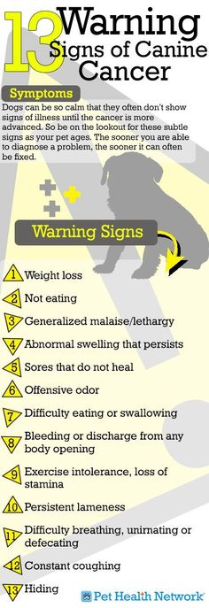 13 Warning Signs of Canine Cancer  | pug care | pug health