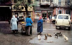 Kuzguncuk'ta kedi olmak... #istanlook